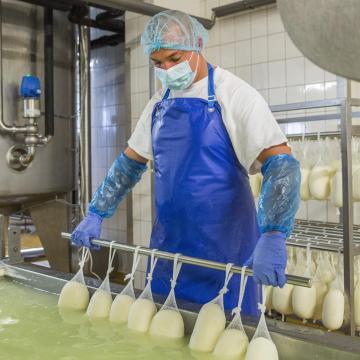 Örülnek a tehenészetek: több tejből több mozzarella