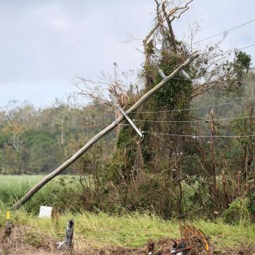 Kétszáz tanya maradt áram nélkül egy favágó miatt