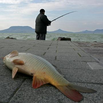 Nem emelkednek jövőre sem a balatoni horgászjegyárak