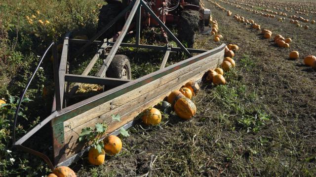 Rekordösszegű előleget kapnak idén a gazdák