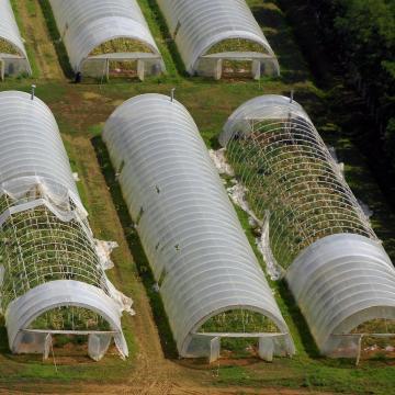 Rendkívüli támogatás segítheti térségünk kárt ért kiskertészeit is