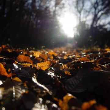 Eső, hó és napsütés is várható ezen a héten