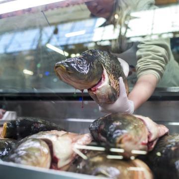 A haltermelők bőséges halválasztékkal készülnek az ünnepekre