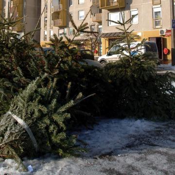 A kidobott karácsonyfák idén is fűtik Pécset
