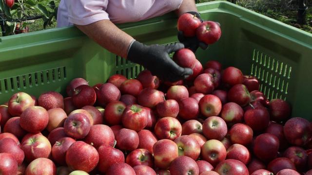 Családonként 14 kg almát kapnak a rászoruló családok