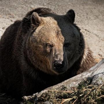 Időjóslás a Medve Napon