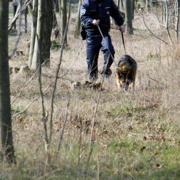 Kutya segítségével pár óra alatt elkapták a 69 éves betörőt