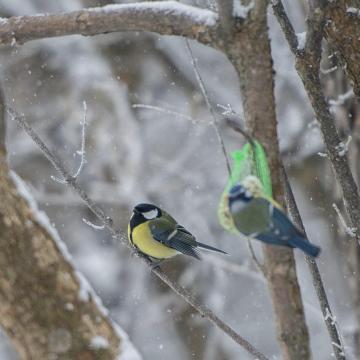 Hétvégi időjárás - A havazás gyengül, a lehűlés erősödik