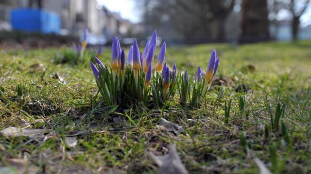 A héten mérséklődik a tavaszias meleg