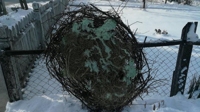 Várják a gólyát - Fészket építettek a Kaposszerdahelyiek