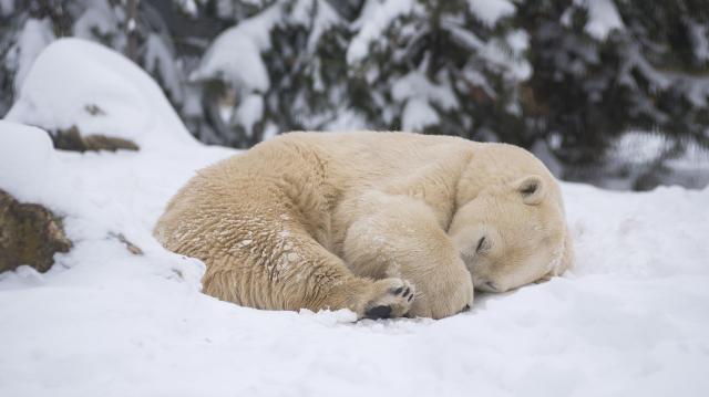 Jegesmedvének való idő után egy hét alatt 20 fokot emelkedhet a hőmérséklet