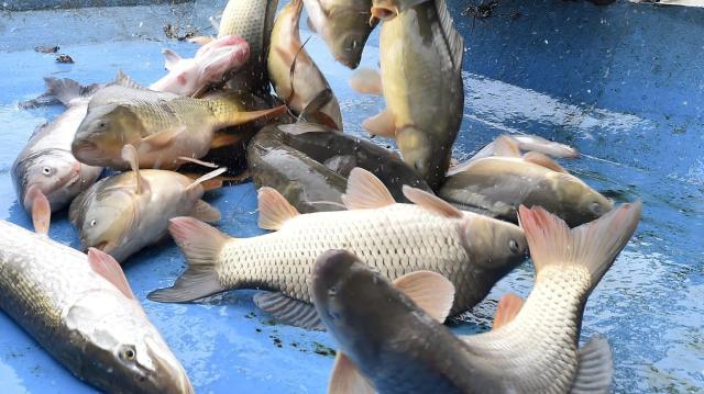 Közel 1,5 milliárd forintból fejlesztették az akvakultúra-ágazatot