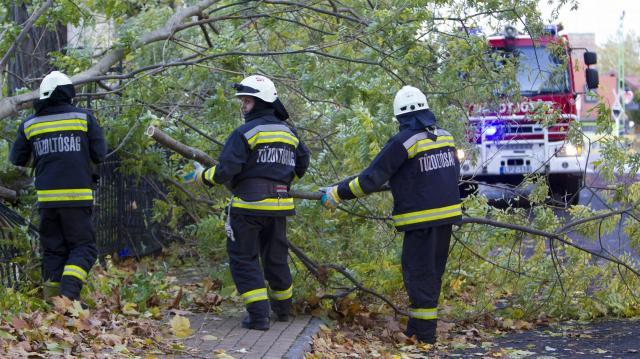 Az erős szélben kidőlt fák, letört ágak miatt hívták a tűzoltókat húsvét vasárnap
