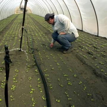 A magyar vásárlók hajlandóak többet fizetni a magyar zöldségért