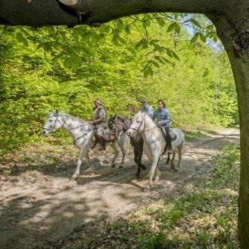 Lovastúra-útvonalak nyíltak a Pilisben