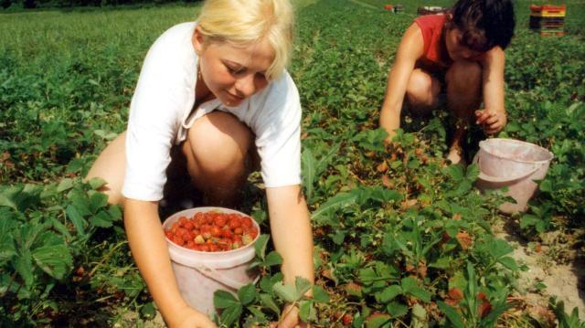 NAV: a mezőgazdasági őstermelőknek ki kell egészíteniük adóbevallás-tervezetüket