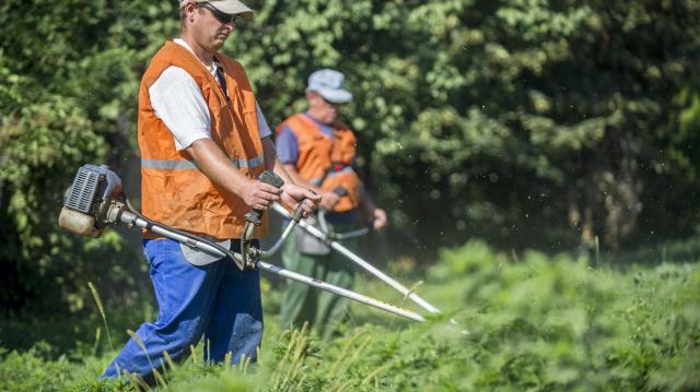 Nébih: a gazdák minél előbb kezdjék el a parlagfű-mentesítést