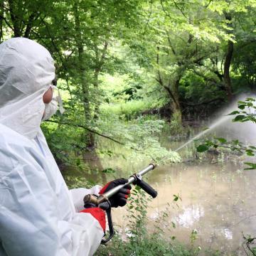 Folytatódik a biológiai szúnyogirtás, a kémiai eljárás napokon belül kezdődik