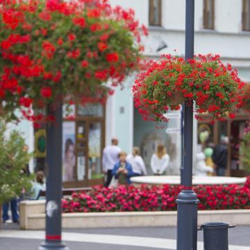 Május végéig várják a nevezéseket a Virágos Magyarországért versenyre