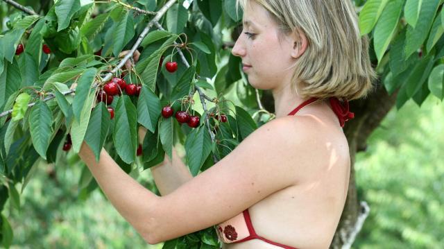 FruitVeB: az idén a közepesnél jobb lehet a cseresznyetermés