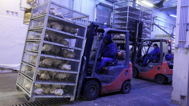 A legnagyobb francia baromfifeldolgozó debreceni céget vett