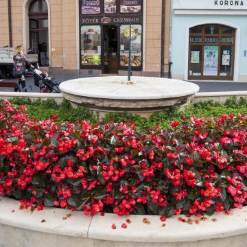 Meghosszabbították A Virágos Magyarország versenyre a jelentkezési határidőt