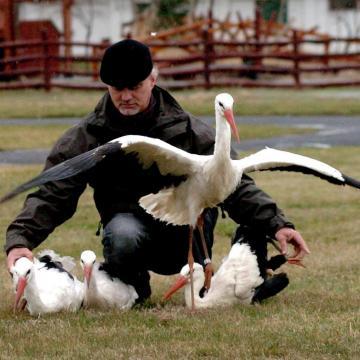 Kilenc lövedéket találtak a mezőnagymihályi gólyában