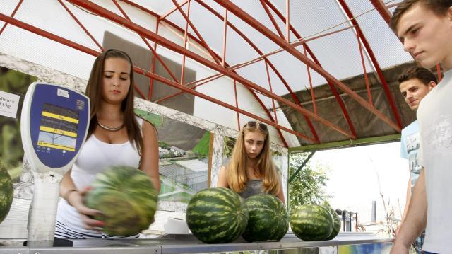 Már június végén lesz magyar görögdinnye