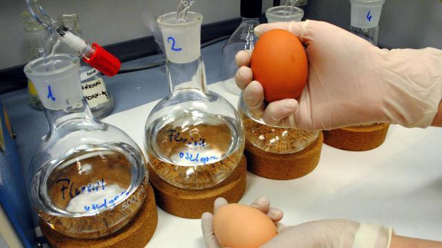 Tojásszövetség: veszélyes lehet a külföldi tojás