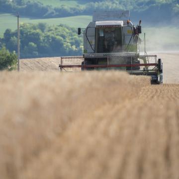 Idén hetekkel korábban kezdődött az aratás
