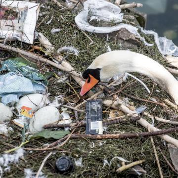 Madártani egyesület: ne etessük a vízimadarakat!