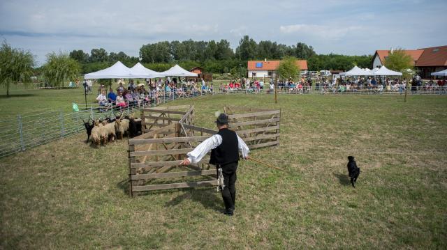 Magyar pásztorkutyák versenyeznek az Ős-Dráva Látogatóközpontban