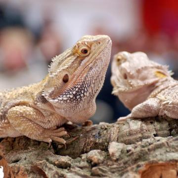 Állatkertek éjszakája - Tizenkét állatbemutató-hely készül programokkal