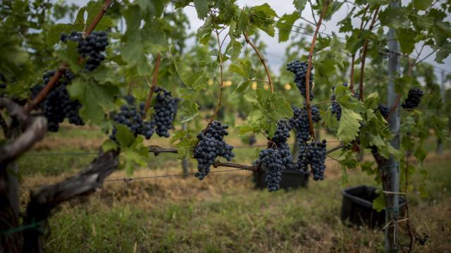 Nyolcadik alkalommal mutatkoznak be Villány prémium borai
