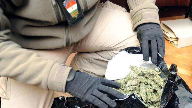 Több mint öt kilogramm kábítószergyanús növényt foglaltak le Pécsen