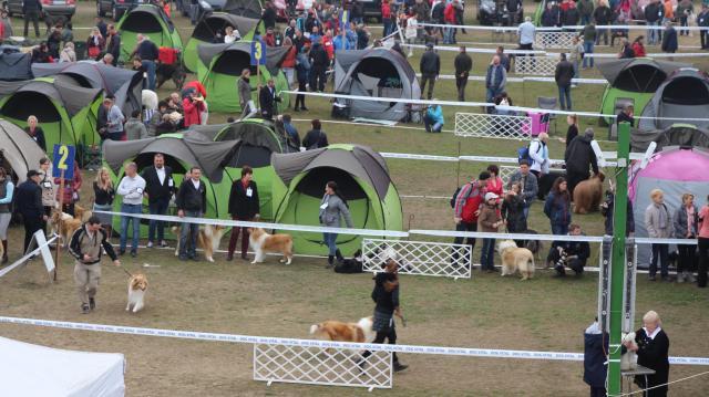Csaknem hatezer kutya érkezik Komáromba