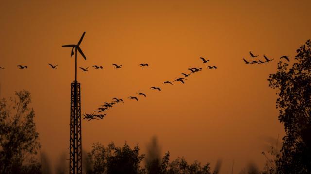 Daruleseket tartanak a Szegedi Fehér-tónál
