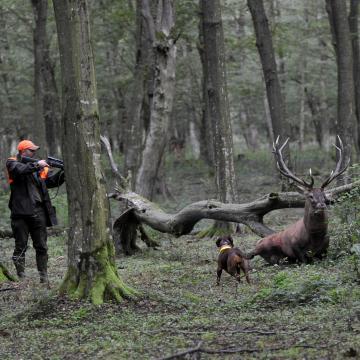 Hamis okiratokkal alapítottak vadásztársaságokat Somogyban