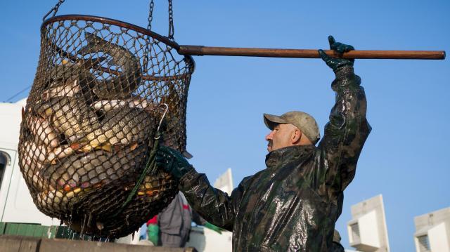 Megkezdődött az őszi lehalászás a hortobágyi halastavakon
