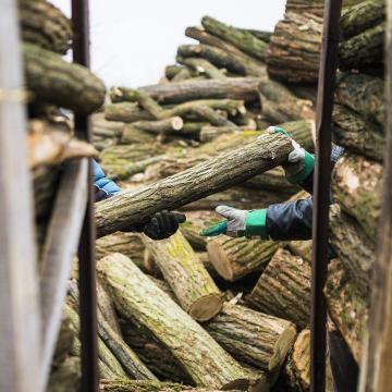 Új adatbázissal harcol a tűzifacsalók ellen a Nébih
