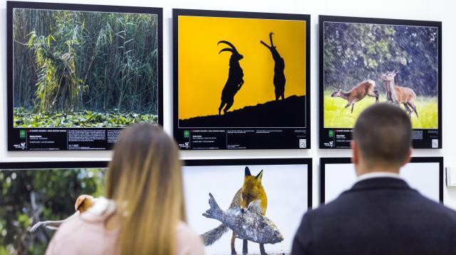 A Természettudományi Múzeumban láthatók az idei legszebb természetfotók
