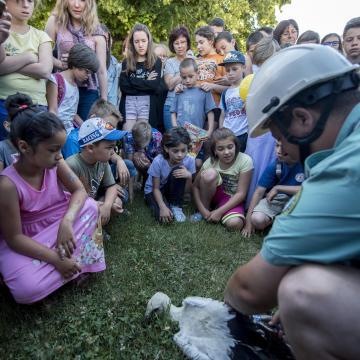 Meggyűrűzhetik a vándormadarakat a Szegedi Fehér-tónál