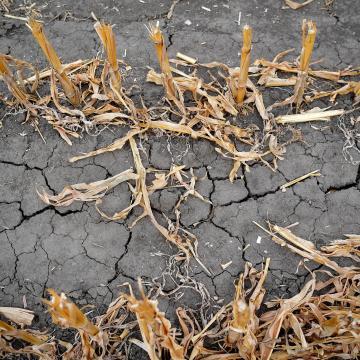 Fokozódik a szárazság, Baranyában a legrosszabb