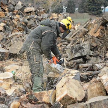 Nem emelkedik a szociális tűzifa ára