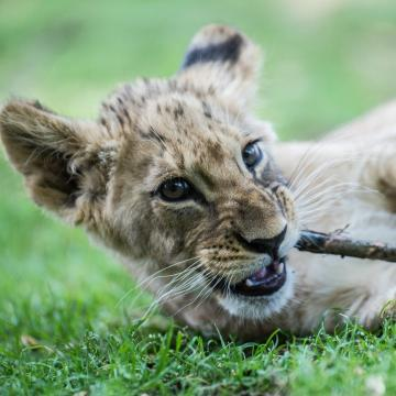 Jó évet zárnak az állatkertek