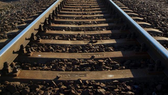 Szarvast gázolt a vonat Tapolcánál