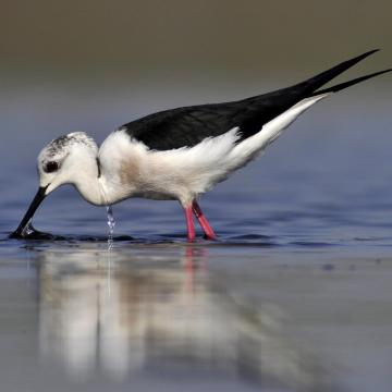 A gólyatöcs lett a 2018-as év madara