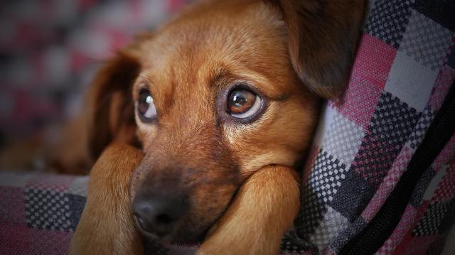 Fokozott figyelemre intenek az állatvédők az év végéhez közeledve