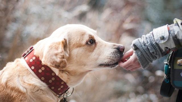 Fokozottan kell figyelni a háziállatokra szilveszterkor
