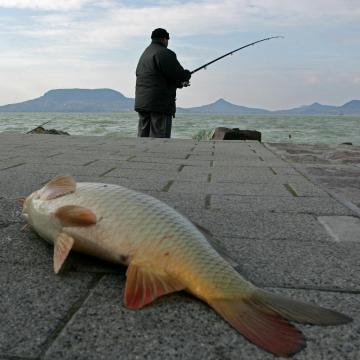 Nem emelkedik a horgászjegyek ára, néhány pontban módosul a helyi rend